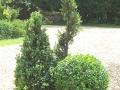 trees2007 008